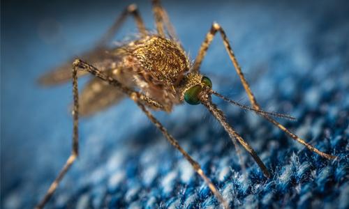 Komar - cichy zabójca